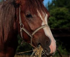 馬 消化 時間