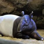 日本でバクに会える動物園って一体どこ!?
