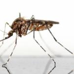 ヤギの飼育!蚊を寄せ付けないための対策方法とは?