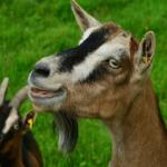 鹿とアルパカとヤギの違いとは!?