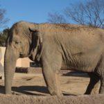 日本にいる象の数はどれくらい!?