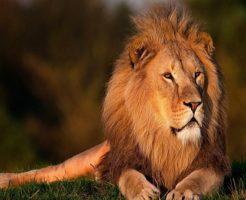 ライオン 顔 虫