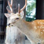 鹿を飼育するのって許可が必要なの?許可の取り方は!?