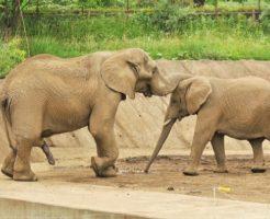 象 糞 重さ 量