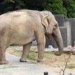 象の脳の大きさや重さはどれくらいなの!?