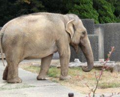 象 脳 大きさ 重さ