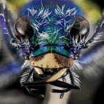 昆虫ハンミョウの生態についてのまとめ
