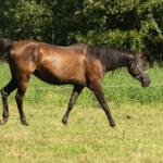馬の体の部位の名称を学ぼう!