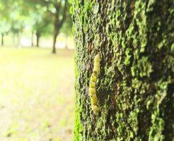シャクトリムシ 幼虫 種類