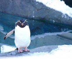 イワトビペンギン 名前 由来