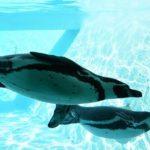 実は少ない!?南極に生息するペンギンの種類について