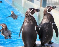 ペンギン 種類 一覧