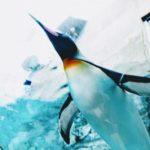 ペンギンの種類の多くが絶滅危惧種に選ばれてる原因とは!?