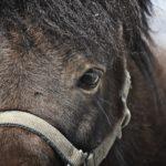 野生種の馬はすでに絶滅している!?