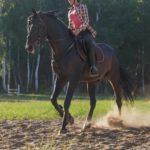 イギリスの馬に乗って行う競技「ポロ」とは!?