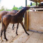 馬の進化の過程や歴史について