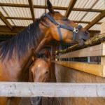 馬の調教。上手な叱り方やコツとは!?