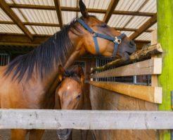 馬 叱り方