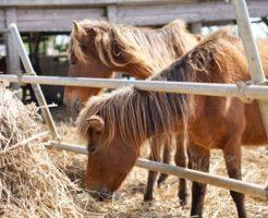 馬 サラブレッド 寿命