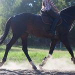 「馬の尻尾の動きで見る感情!」