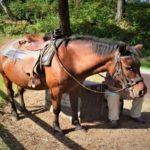 「馬の一日に移動できる距離はどれくらい!?」